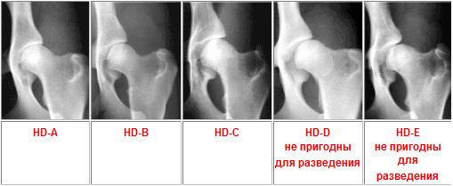 магнитотерапия при дисплазии тазобедренных суставов собак